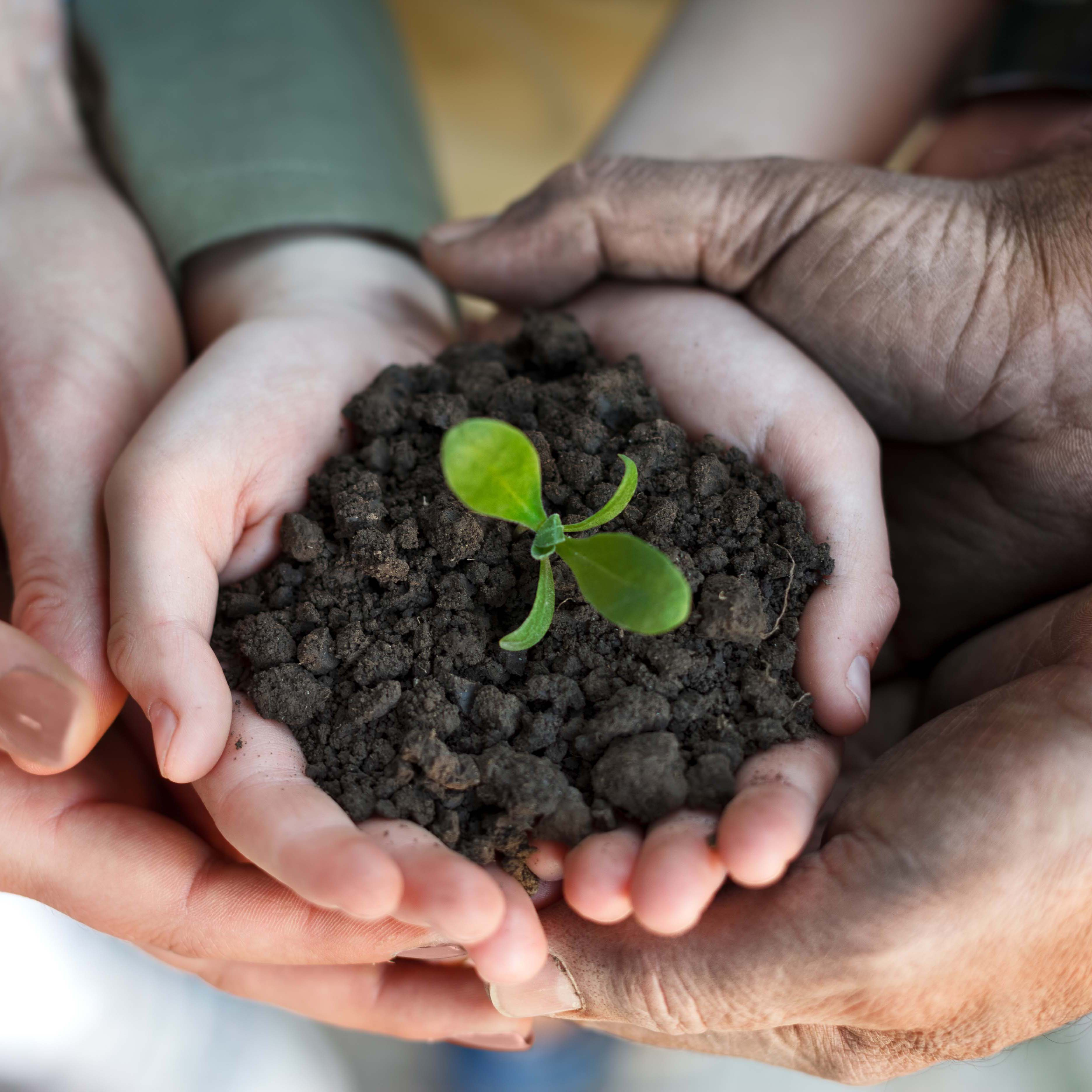 Arrow Health Holding a Soil with a Growing Plant
